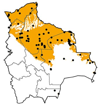 Heliornis fulica