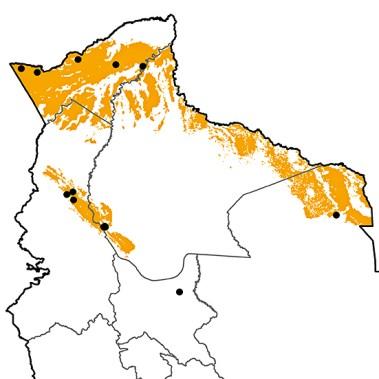 Lophornis chalybeus