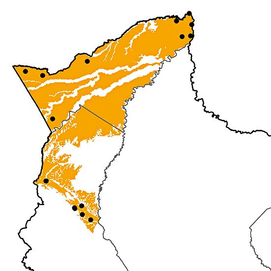 Myrmothera campanisona