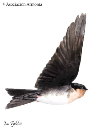 Pale-footed Swallow (Orochelidon flavipes)