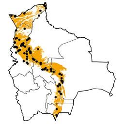 Phaethornis malaris