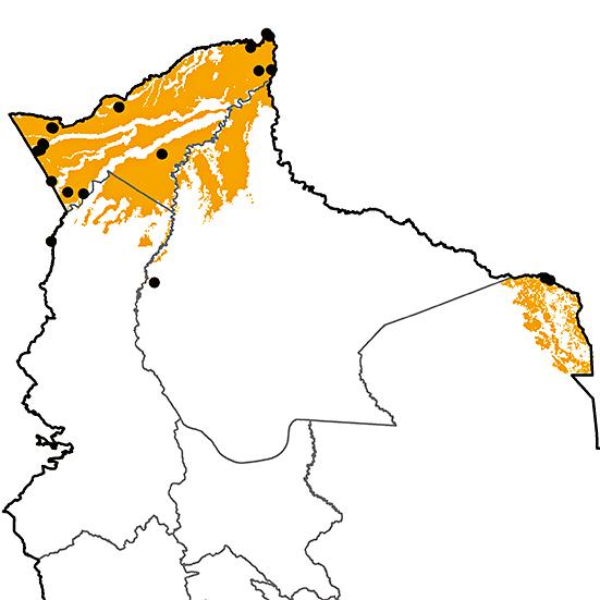 Phaethornis philippii