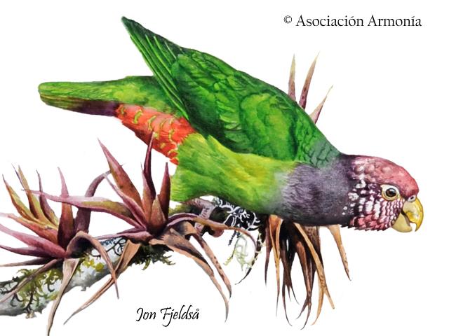Speckle-faced Parrot (Pionus tumultuosus)