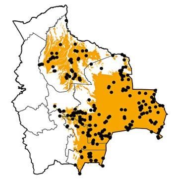 Polioptila dumicola