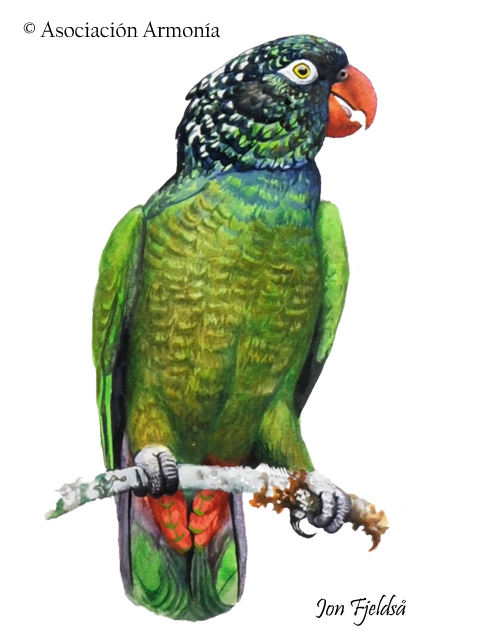 Red-billed Parrot (Pionus sordidus)