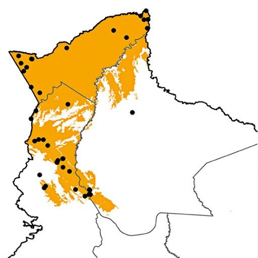 Selenidera reinwardtii