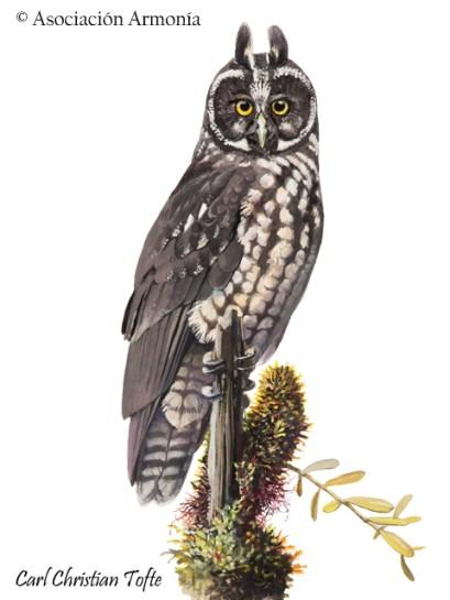 Stygian Owl (Asio stygius)