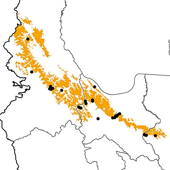 Veniliornis nigriceps
