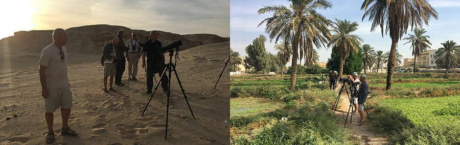 Birdwatching Tours in Kuwait