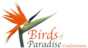 Birds of Paradise - Ajijic, Chapala, Mexico