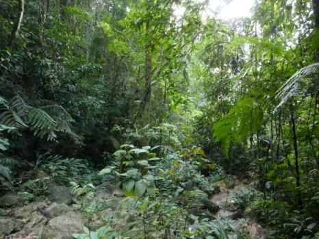 Forest at Pauxi Pauxi