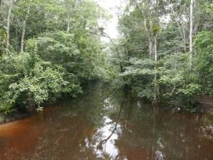 Black water river Mitú Cachivera