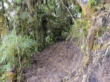 Newly created trail at Yanacocha = antpitta heaven