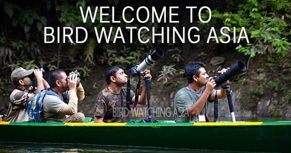Asia Bird Watching