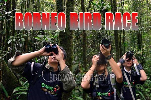 Borneo Bird Race