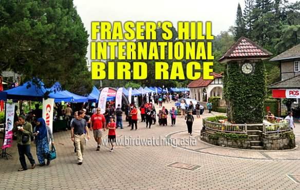 Fraser's Hill International Bird Race