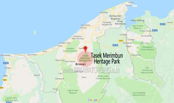 Bird Watching Tasek Merimbun