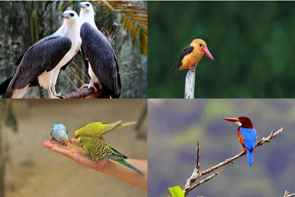 Langkawi Birds