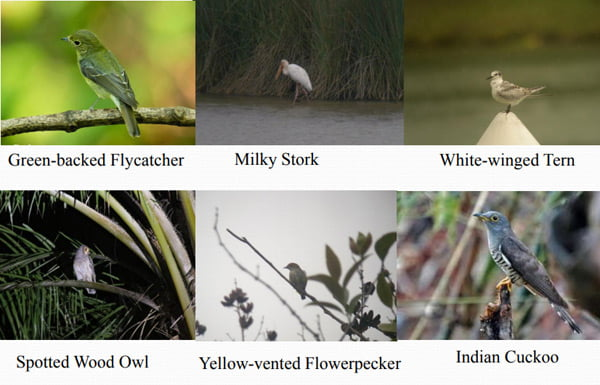 Bird Species in Putrajaya