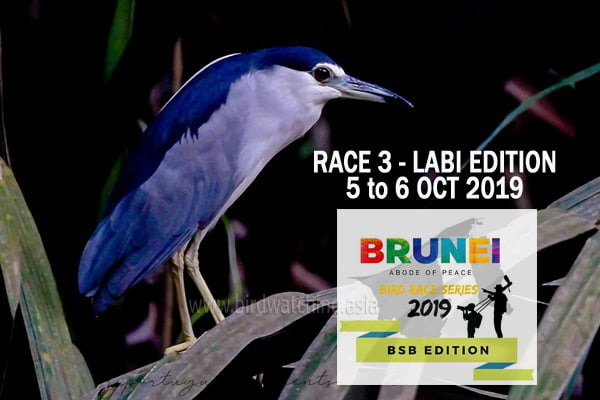 Brunei Bird Race Series 3 Labi Edition