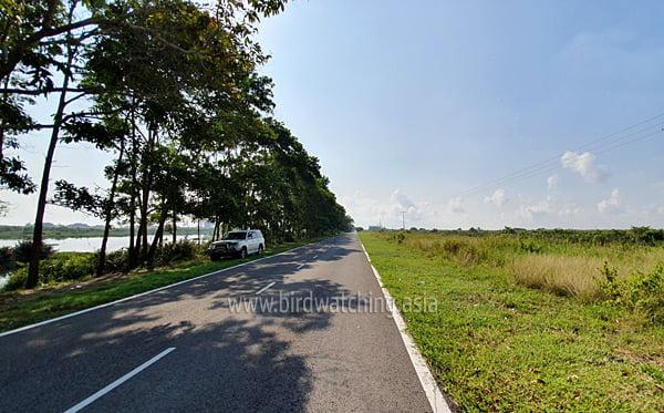 Kuala Baram Wetlands Road