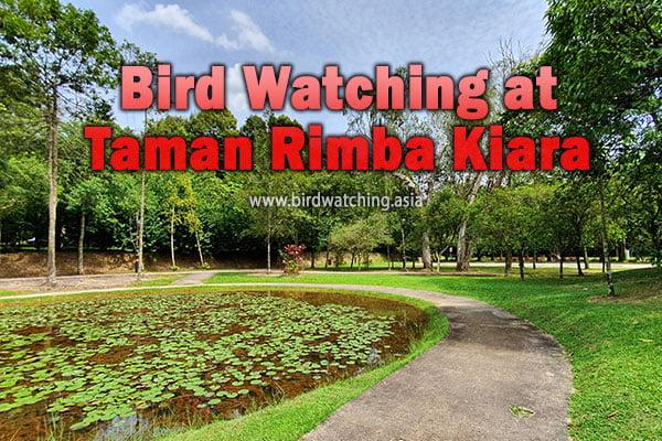 Taman Rimba Kiara Bird Watching