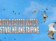 Raptor Watch Taiping