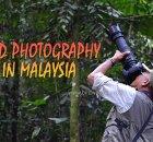 Malaysia Bird Photography
