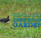 Kepong Botanical Gardens Bird Watching
