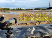 Kuching Ash Pond Bird Watching