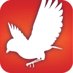 Best Bird Watching Apps