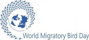 World Migratory Bird Day - Birding Holiday