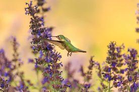 Bird Holidays - National hummingbird day