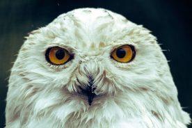 Owl Awareness Day