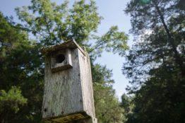 Bird Shelter as Birding Present