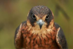 Bird Images, Bird Photographs, Bird Pictures