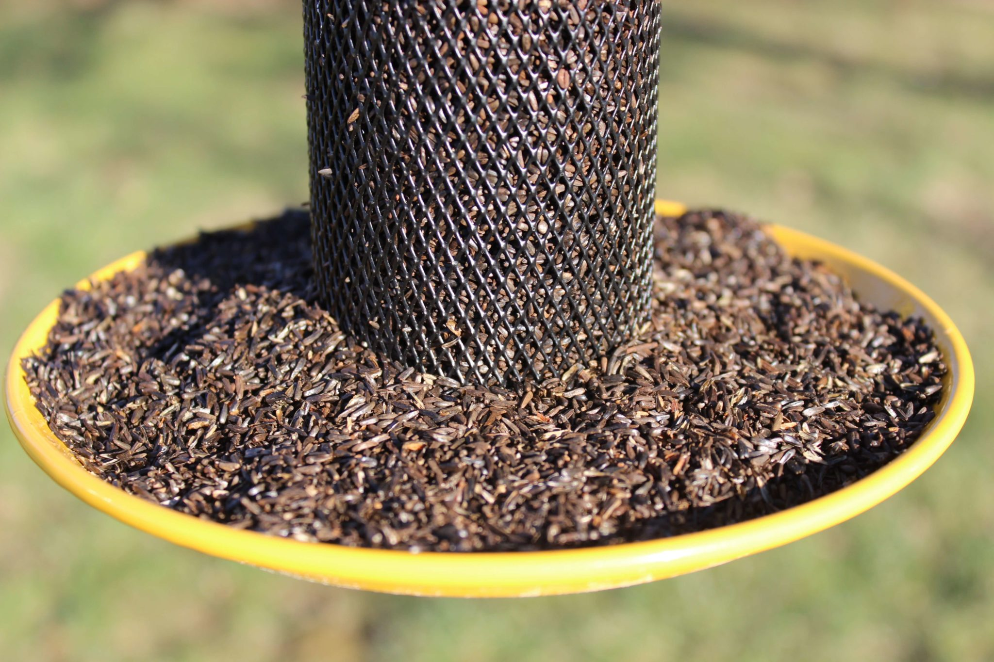 black finch and yellow feeder dp straight sided feeders no amazon