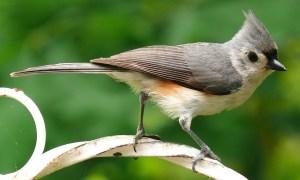 the best squirrel proof bird feeder poles