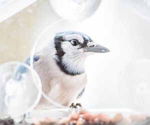 Blue Jay Feeders: The 4 Working Best For Me (2019)