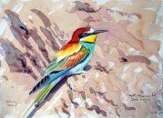 03 Szabocs Kokay - birdingmurcia
