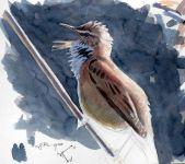 05 Szabocs Kokay - birdingmurcia
