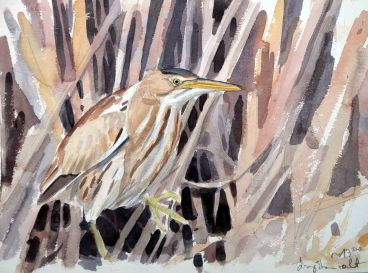 06 Szabocs Kokay - birdingmurcia