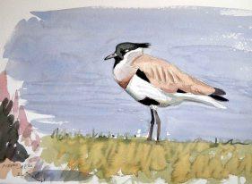 07 Szabocs Kokay - birdingmurcia