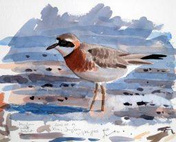 08 Szabocs Kokay - birdingmurcia