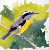 13 Szabocs Kokay - birdingmurcia