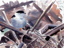 14 Szabocs Kokay - birdingmurcia