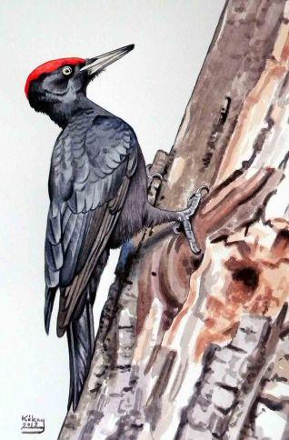 35 Szabocs Kokay - birdingmurcia