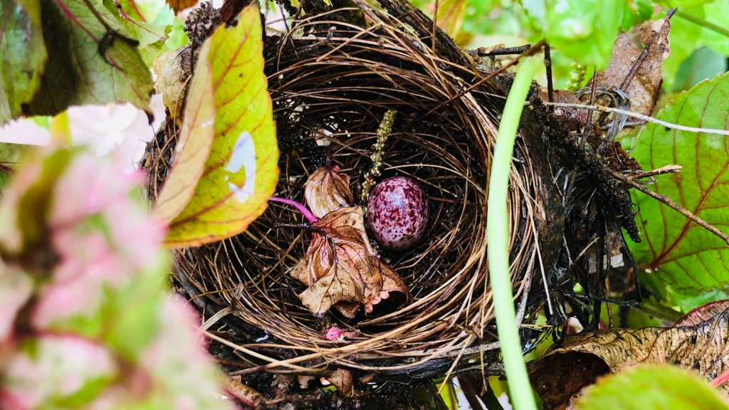 How Long Does it Take a Bird to Build a Nest
