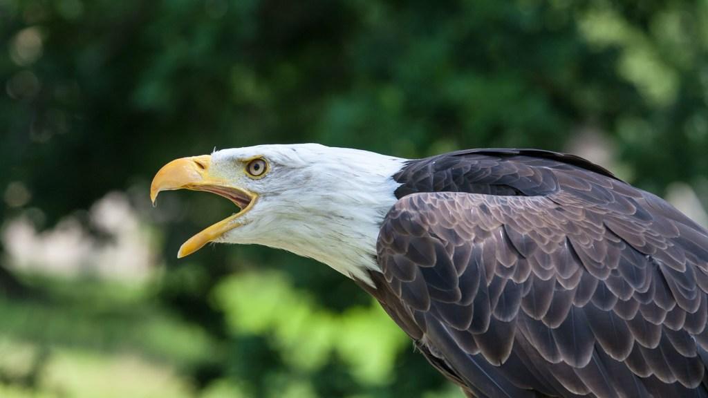 How to Make Wooden Bird Calls