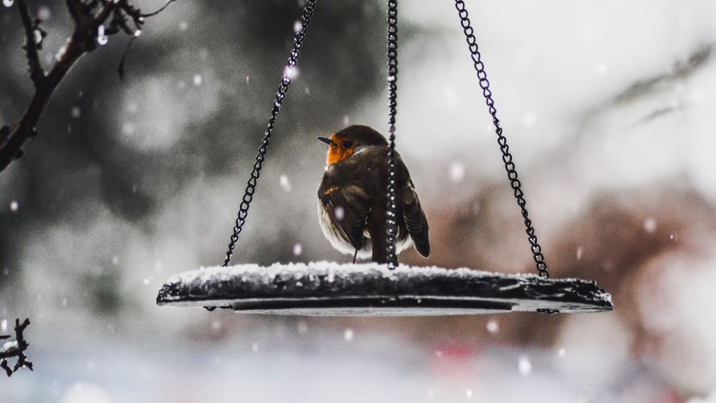 What Do Robins Eat in the Winter